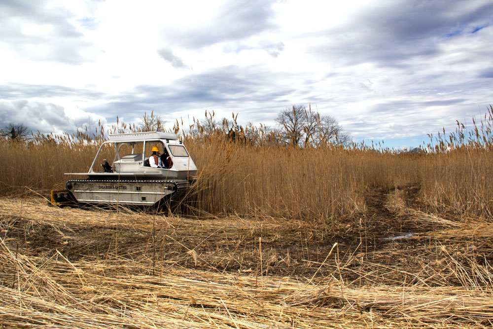 Marsh Master in Action Cutting Phragmites, 2017