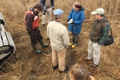 Phragmites Eradication